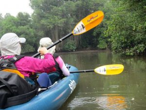 Inflatable Kayaks With Paddles