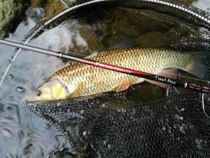 force master trout area fishing rod with chub