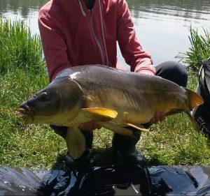 Big carp from the lake