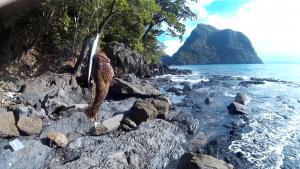 Lapu lapu on wobbler caught in the Philippines