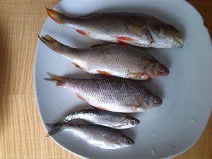 Pike bait fish on plate