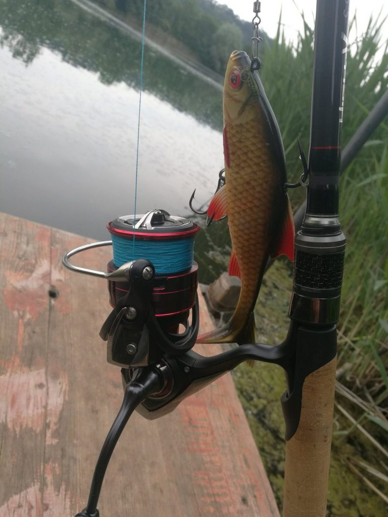 Big bait, big fish and load on the reel.  The Fuego has done very well so far.